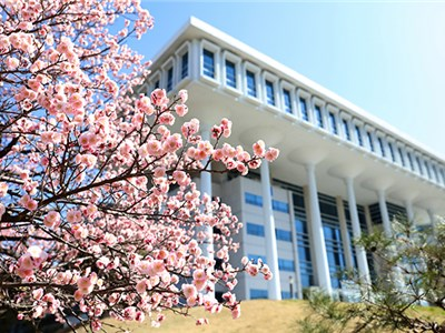 Red Apricot Blossom Ushers in Spring on the Sparsely Visited Campus